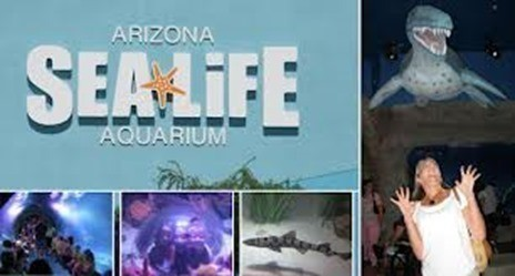Arizona sea life aquarium b1g1 free admission on sunday Arizona mills mall aquarium