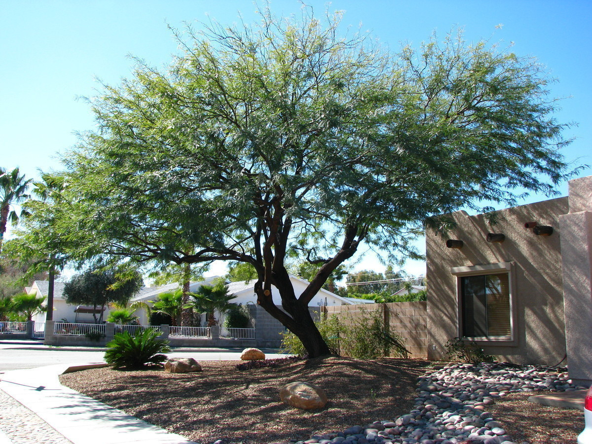 Upcoming SRP Shade Tree Workshops Available