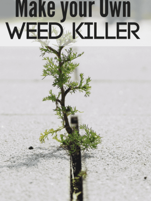 How To Make your Own Homemade Weed Killer
