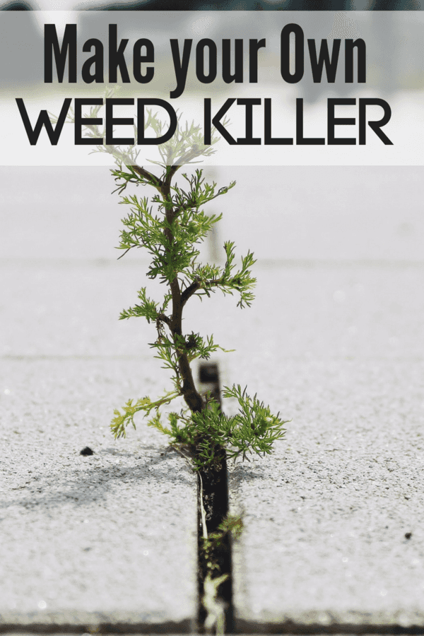 Make your own weed killer that's EFFECTIVE and INEXPENSIVE!