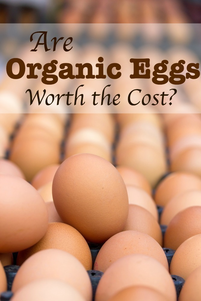 Are Organic Eggs Worth the Cost?