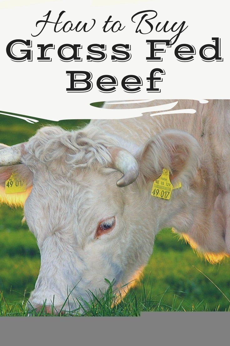 Grass-fed (pastured) beef is much more beneficial for your health than traditional grocery store beef, though the process of buying can be overwhelming. Here are some tips to help you buy grass-fed beef in your area.