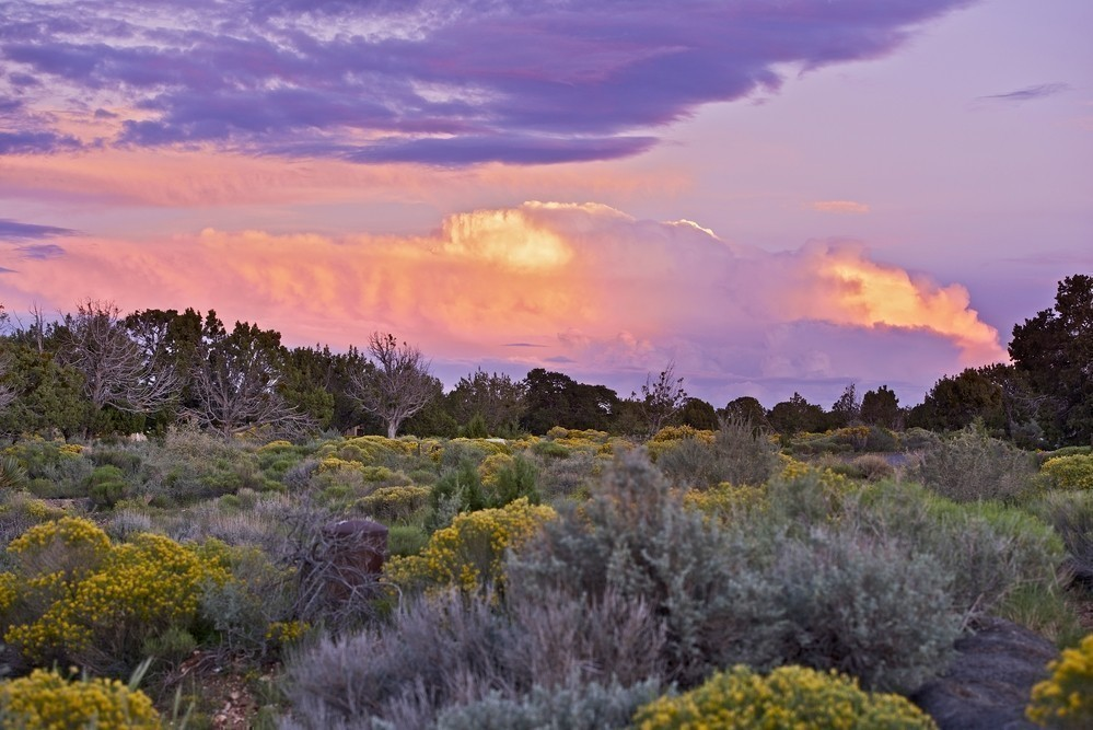 Wildflowers bloom in Arizona from March to May - here's a list of the BEST places to see those beautiful blooms!