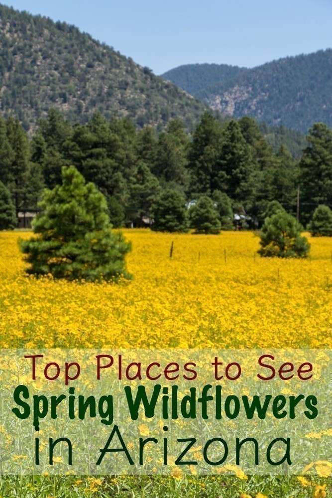 Top Places to See Spring Wildflowers in Arizona