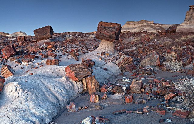 Petrified Forest, Holbrook