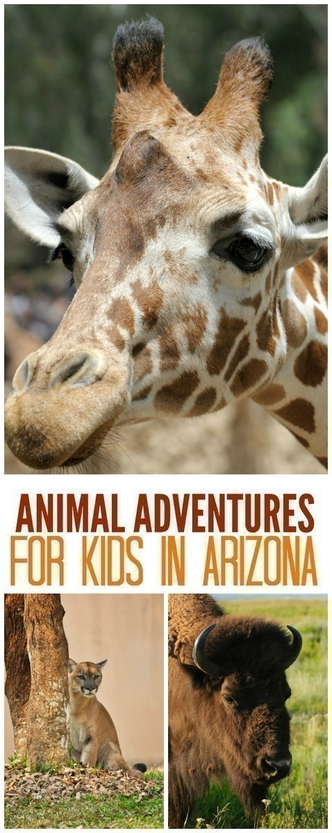 Here are some of the best places in Arizona to take the kids to see animals of all kinds - whether for the day, or as a road trip over the course of a weekend.