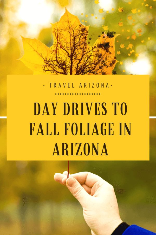 Arizona just might be the best place to see the leaves change colors - see some of our favorite day drives to fall foliage!  #Arizona | #Fall | #Seasons