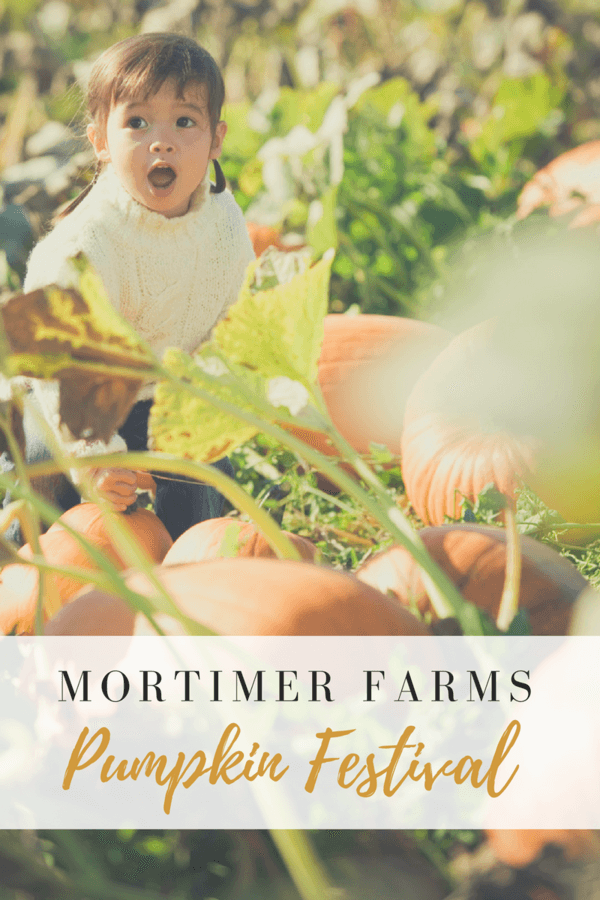 Head up to Dewey, Arizona and spend the day at the Mortimer Farms Pumpkin Festival!