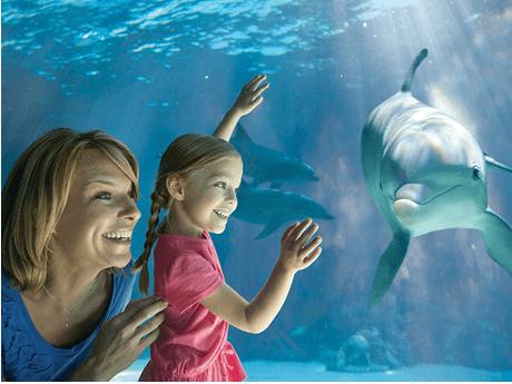 FREE SeaWorld Teacher Fun Card + 2 FREE Single Day Tickets (Teachers in AZ and CA)
