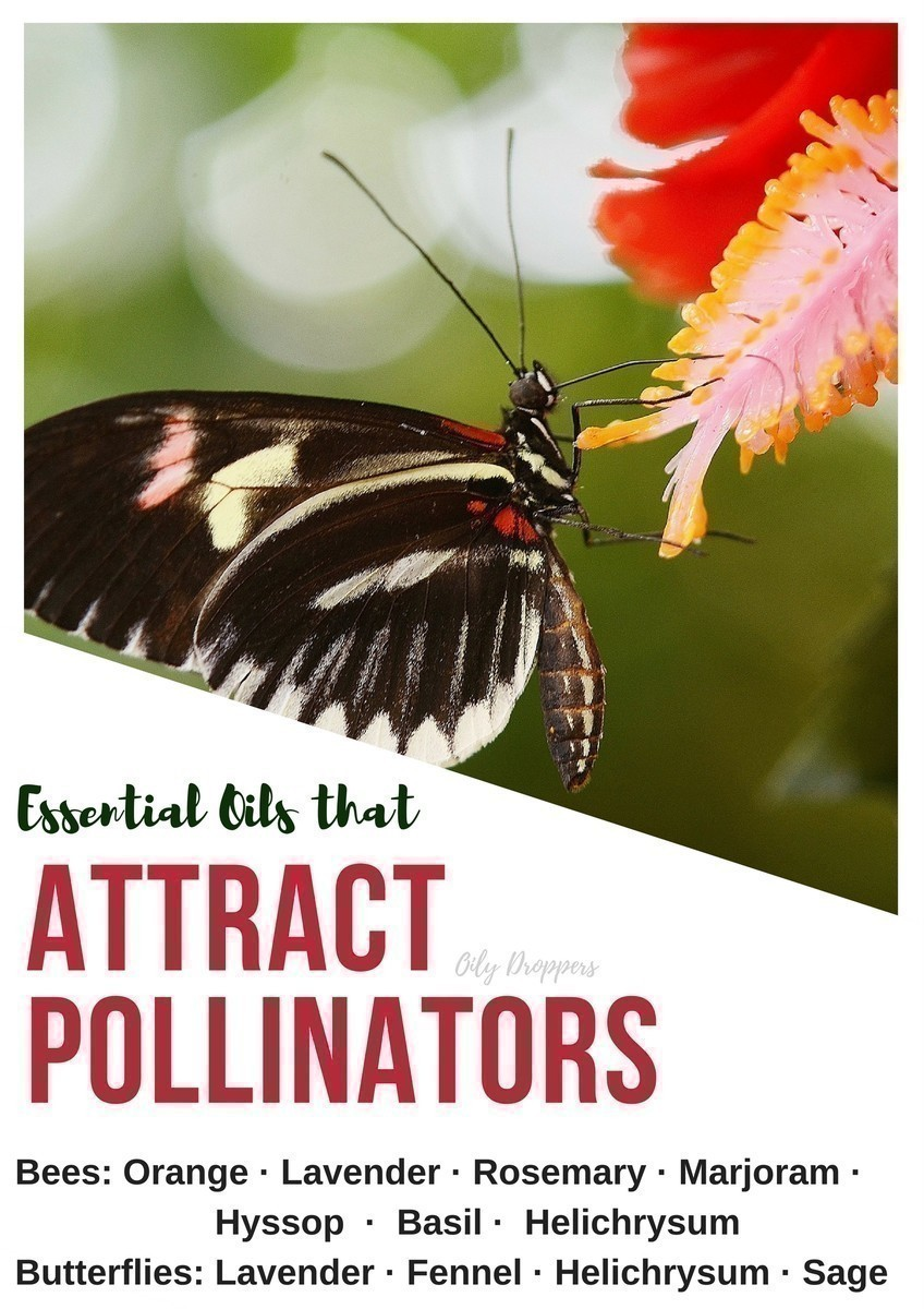 Essential Oils can be tremendously helpful in your homestead - they can help you ward off critters, attract pollinators and provide relief to the gardener.