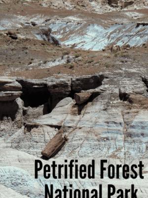 Visit the Petrified Forest National Park (Arizona)