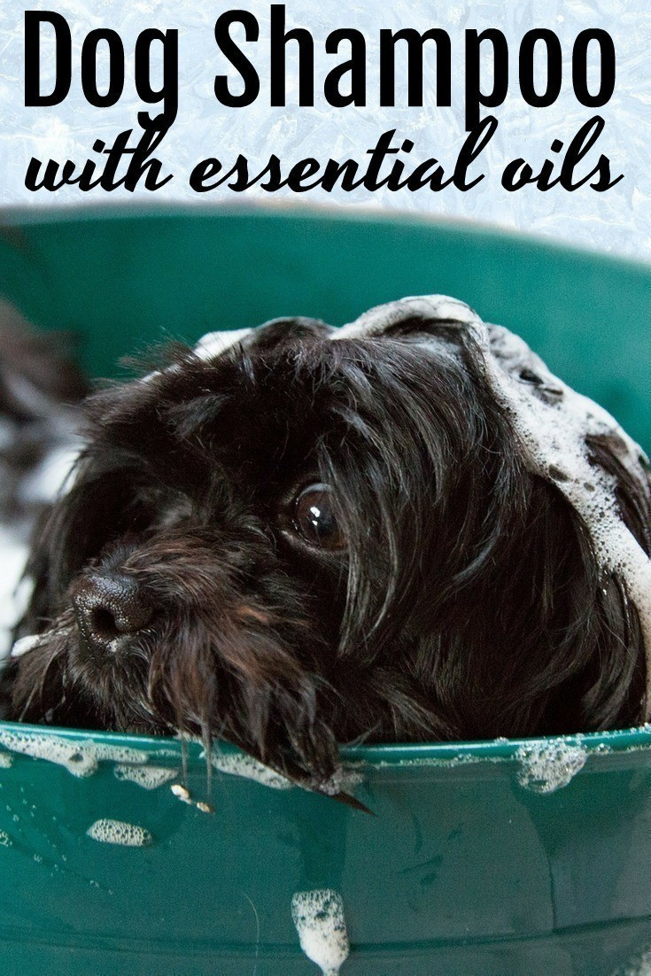 This DIY foaming non-toxic dog shampoo is a wonderful alternative to commercial dog shampoos that can contain a myriad of chemicals. It's SO easy to make and is incredibly effective! #DIY | #Pets | #EssentialOils