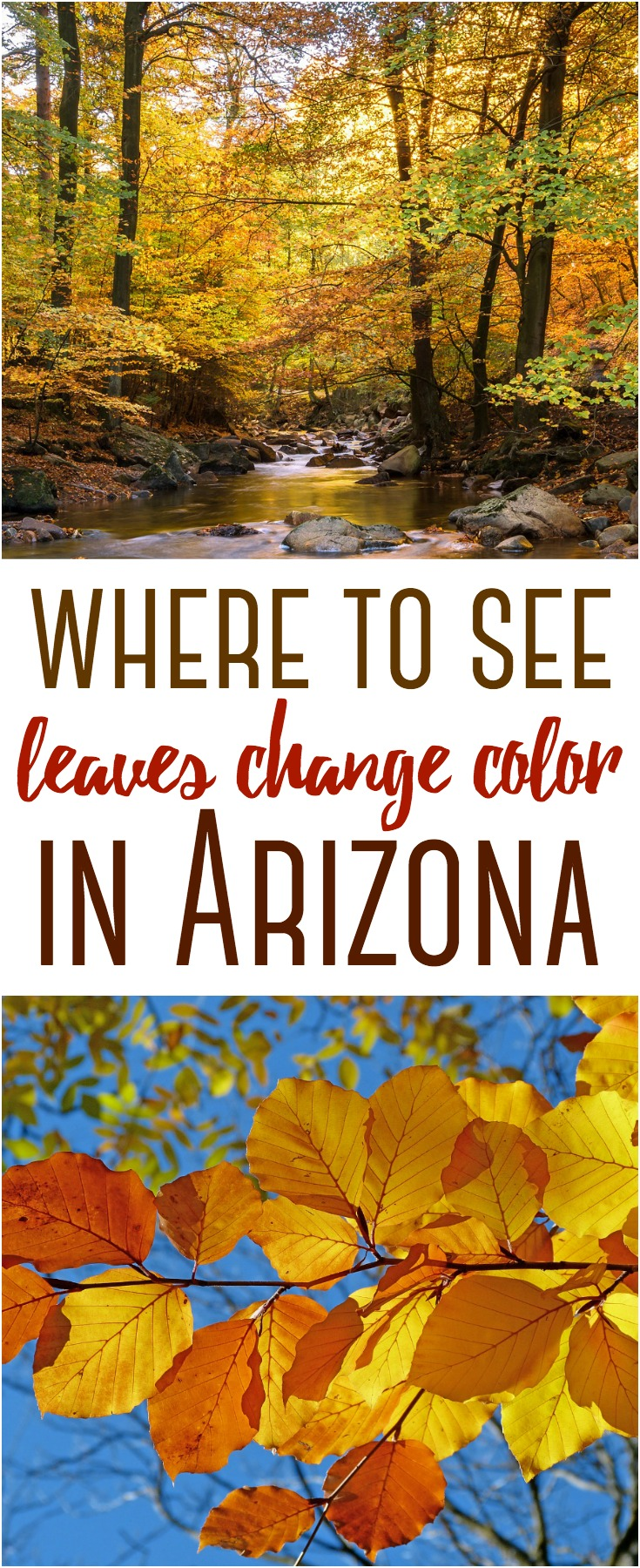 Your guide to see fall leaves change color in Arizona. Here are several easy day trips to that provide many opportunities to see the leaves change colors.