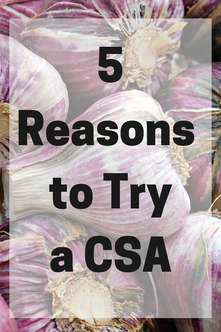 CSAs are growing in popularity - it's a very rewarding and fulfilling relationship between farm and consumer. Here are 5 Reasons to Try a CSA this new year.  #CSA #farmtotable #knowyourfarmer