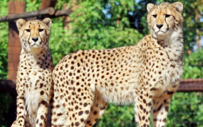 Groupon Deals on Wildlife World Zoo, Lowell Observatory and Biosphere