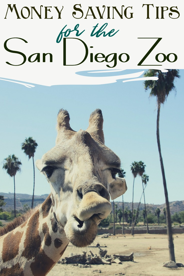 Planning a trip to Southern California? Here are several ways to save money at the San Diego Zoo! #sandiego #zoo #california #roadtrip #family #savingmoney