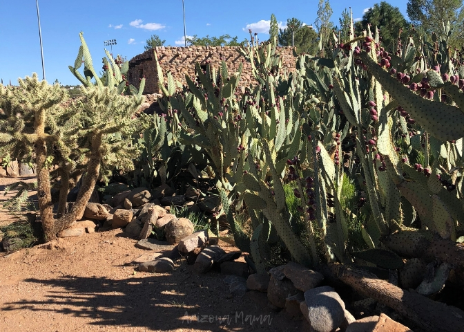 Botanical Garden with various desert plant varieties at Besh Ba Gowah Archaeological Ruins in Globe, Arizona || Besh Ba Gowah Archaeological Park and Museum is a prehistoric Salado masonry pueblo located one mile southwest of the city of Globe, Arizona.
